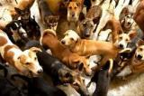 dog registration sri lanka