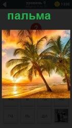 На берегу солнечного берега растет пальма, которая наклонилась. Вдали солнце садится за горизонт