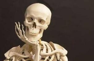 Mapa interactivo del esqueleto