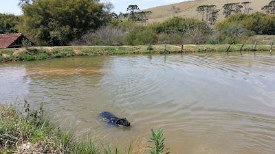 lago no Pé na Trilha