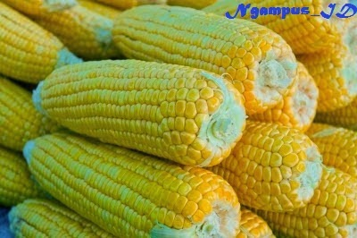Unduh 84 Koleksi Background Kuning Jagung HD Terbaik