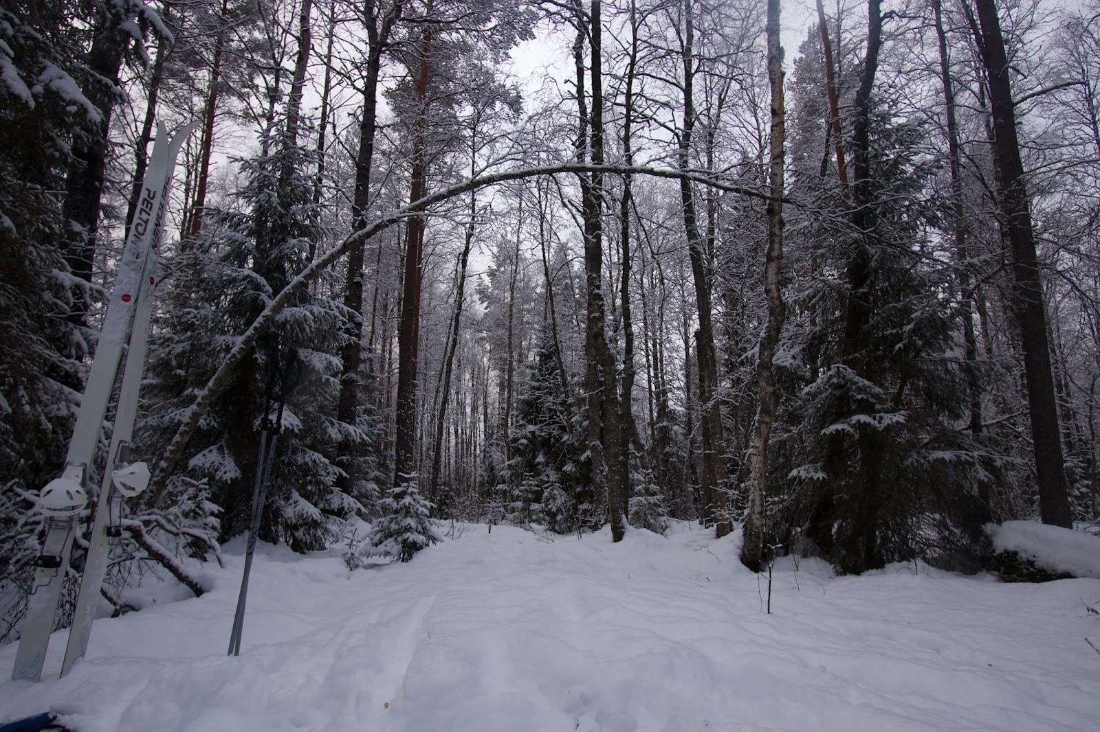 takaisin Salamajärven kansallispuiston alueella