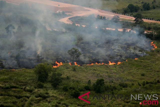 BNPB : Luas kebakaran hutan dan lahan Riau capai 2.830 hektare