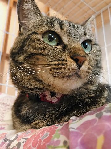 下方向から撮ったキジトラ猫の顔のアップ
