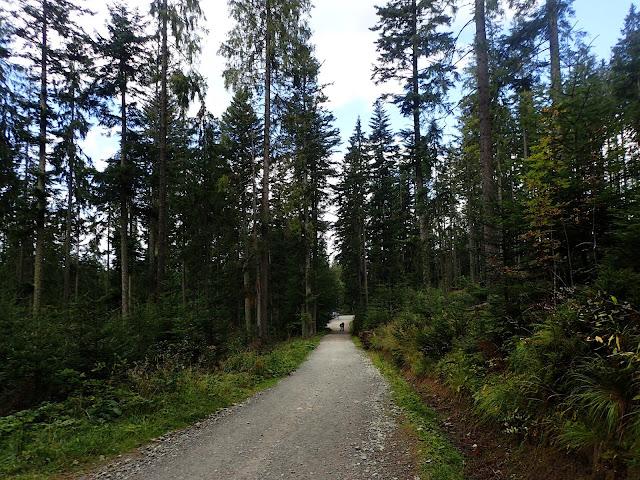 Początek szlaku z Zazadniej na Rusinkę