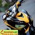 Sơn tem đấu Airbursh Exciter 2011 màu vàng đen nhám
