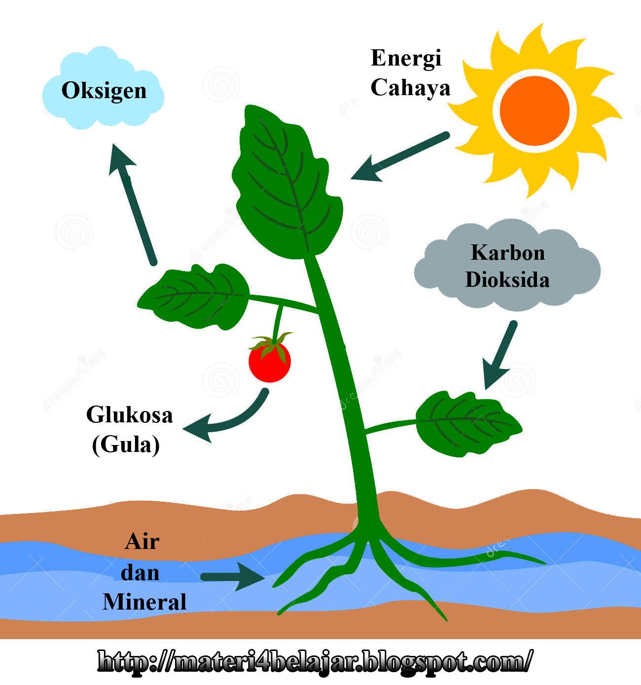 Fotosintesis Tumbuhan Lessons Tes Teach