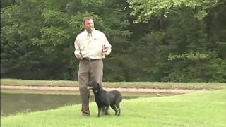 Tri Tronics Sport Basic G3 dog training tips