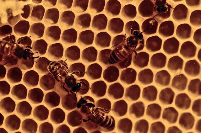 Παγκόσμια έρευνα για το μέλι: To 75% των δειγμάτων περιέχουν νεονικοτινοειδή φυτοφάρμακα