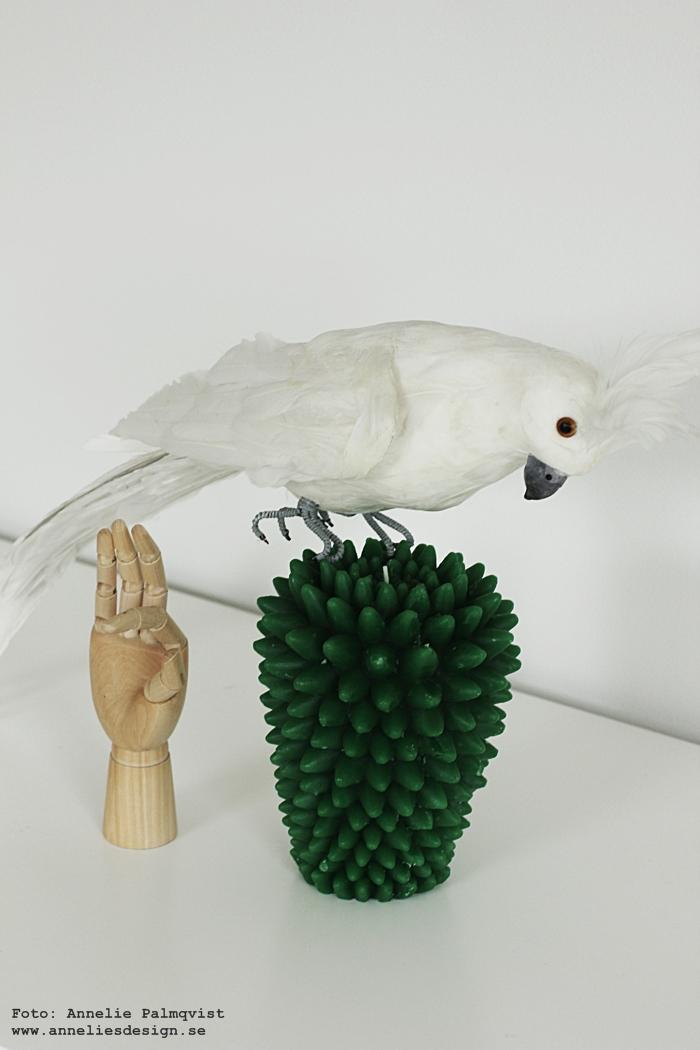 kaktus, stearinljus, ljus, kaktusar, papegoja, papegojan, inredning, webbutik, webbutiker, webshop, annelies design, interior,
