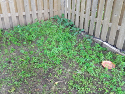 Beach Hill backyard cleanup before by Paul Jung Gardening Services Toronto