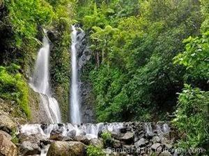 puisi_tentang_alam_lingkungan_hijau_hutan