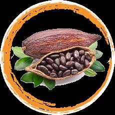 Cocoa Viet Nam