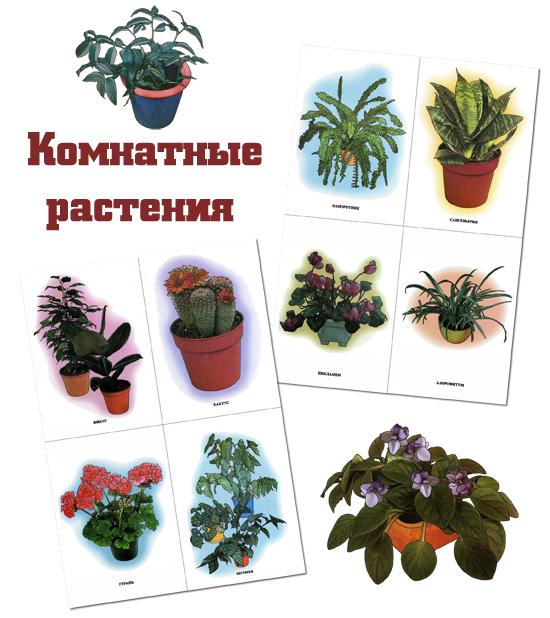 Картинки, комнатные растения картинки с надписями