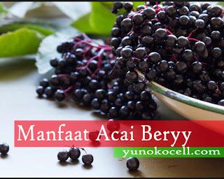 Manfaat Acai Berry Bagi Kesehatan Tubuh Manusia