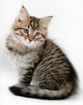 кошки и здоровье человека