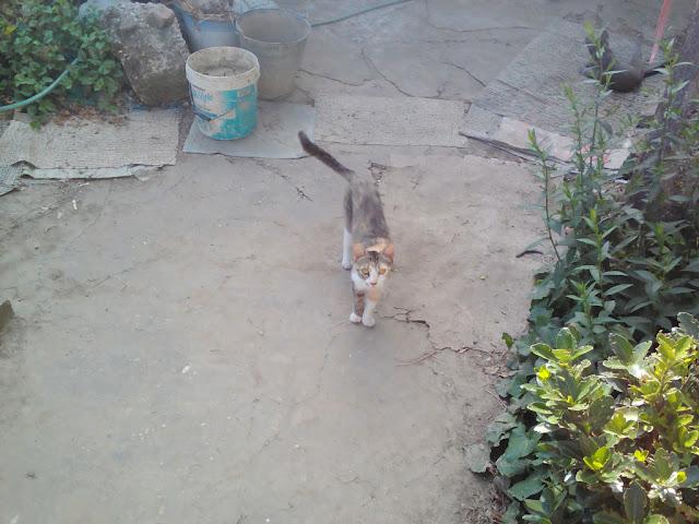 Tedi Cat