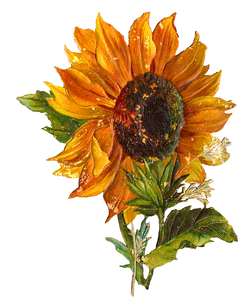 Antique Images: Digital Stock Sunflower Artwork Flower ...