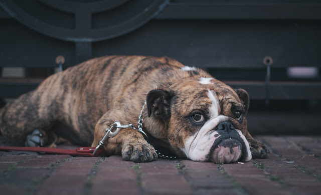 Treat Your Pet Right With These Dog Care Tips