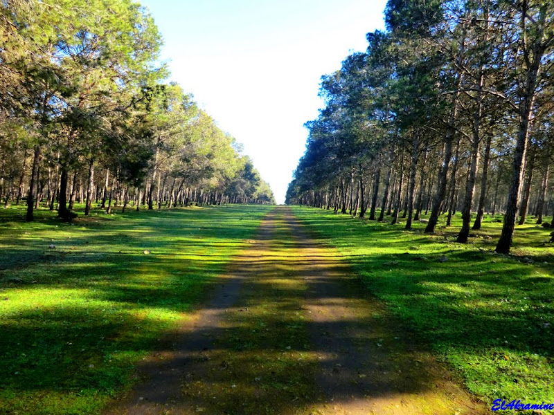 La forêt de Bouskoura va être aménagée et pourra accueillir les Casablancais.