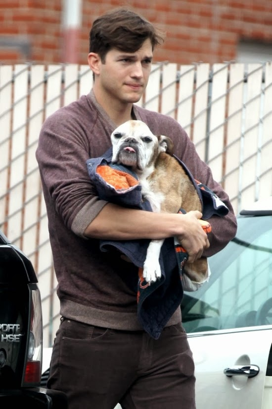 Do Ashton Kutcher sick dog