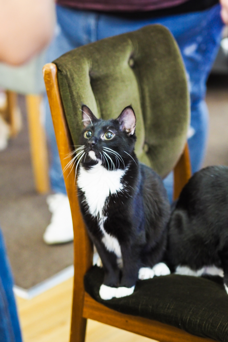 Glasgow Cat Cafe Review Afternoon Tea Willow Tea Rooms Glasgow's Leading Attractions | Colours and Carousels - Scottish Lifestyle, Beauty and Fashion blog