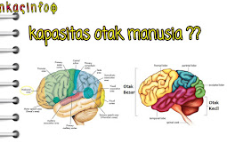 Berapa kapasitas otak manusia? 10% hanya di gunakan