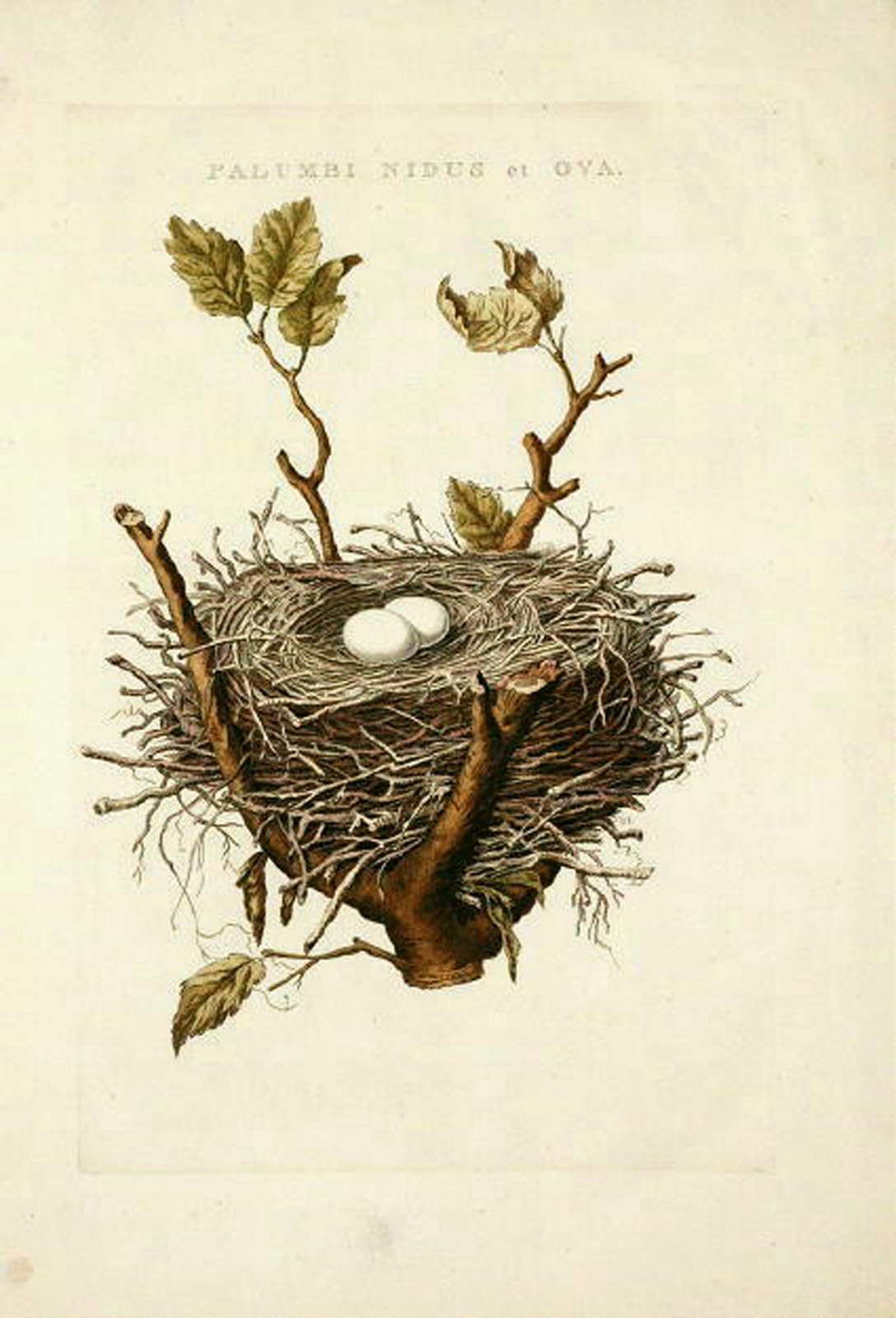 It's just a graphic of Unusual Bird In Nest Drawing
