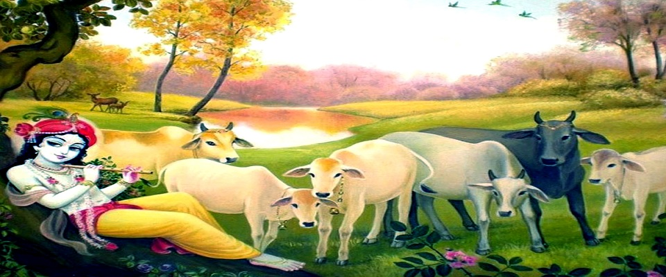 Lord Krishna With Cows In Vrindavan