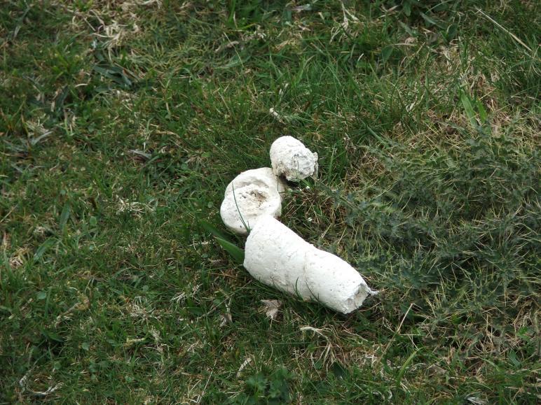 dog poop turns white