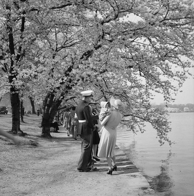 5 April 1941 worldwartwo.filminspector.com Cherry Blossoms Washington D.C.