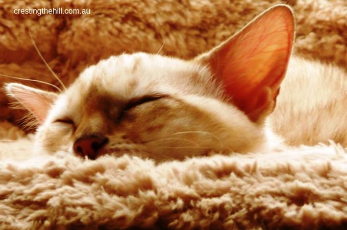 Cats can teach us so many life lessons - the first is to take the time for a nap or two and recharge #inspiration #lifelesson