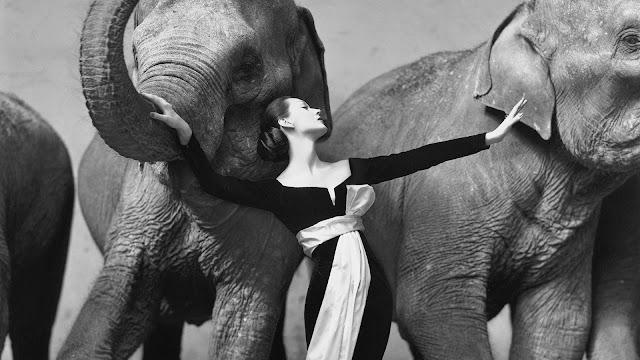 Foto Richard Avedon Dovima with Elephants foto termahal di dunia berharga milyaran rupiah