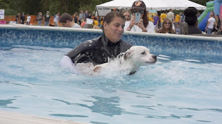 A dog gets some help in the swimming pool