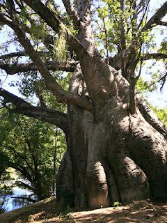Jardim do Baobá - Parque Capibaribe