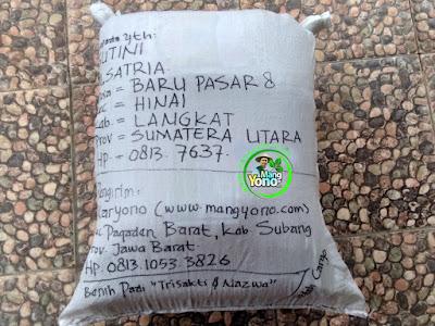 Benih pesana    SUTINI Langkat, Sumut   (Sesudah Packing)