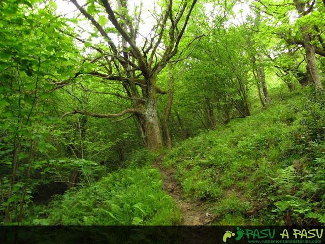 Sendero en el bosque, La Molina