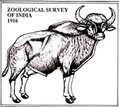 zoological-survey-of-india-recruitment-career-apply-latest-govt-jobs-vacancy