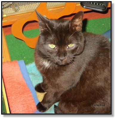 schwarze Katze im Auto