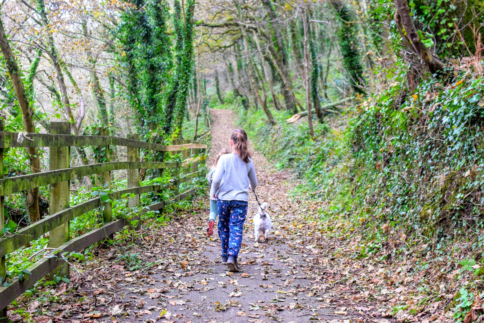, Embrace #NoDullDays This Winter – a Leafy Walk at Lower Priory