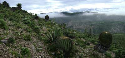 Algunos ecosistemas mexicanos