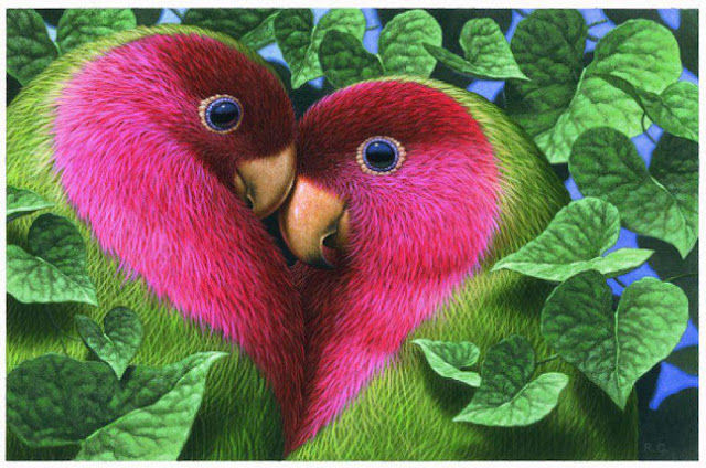 Love Birds HD Wallpapers Free Download