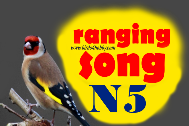 the ranging songs of goldfinch Before Mating number 05