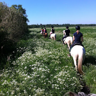 Viro, Muhu, niittylaukka, riitta reissaa, ratsastusmatka