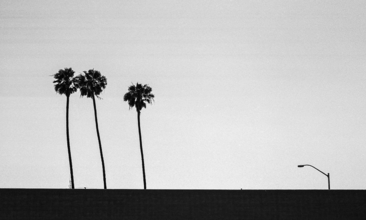 tumblr inspiration / LA palm tress