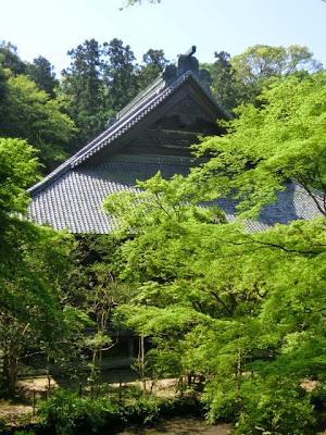 妙本寺の新緑