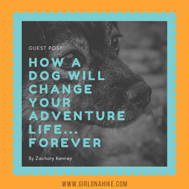 How an Adventure Dog will Change your Life...Forever!