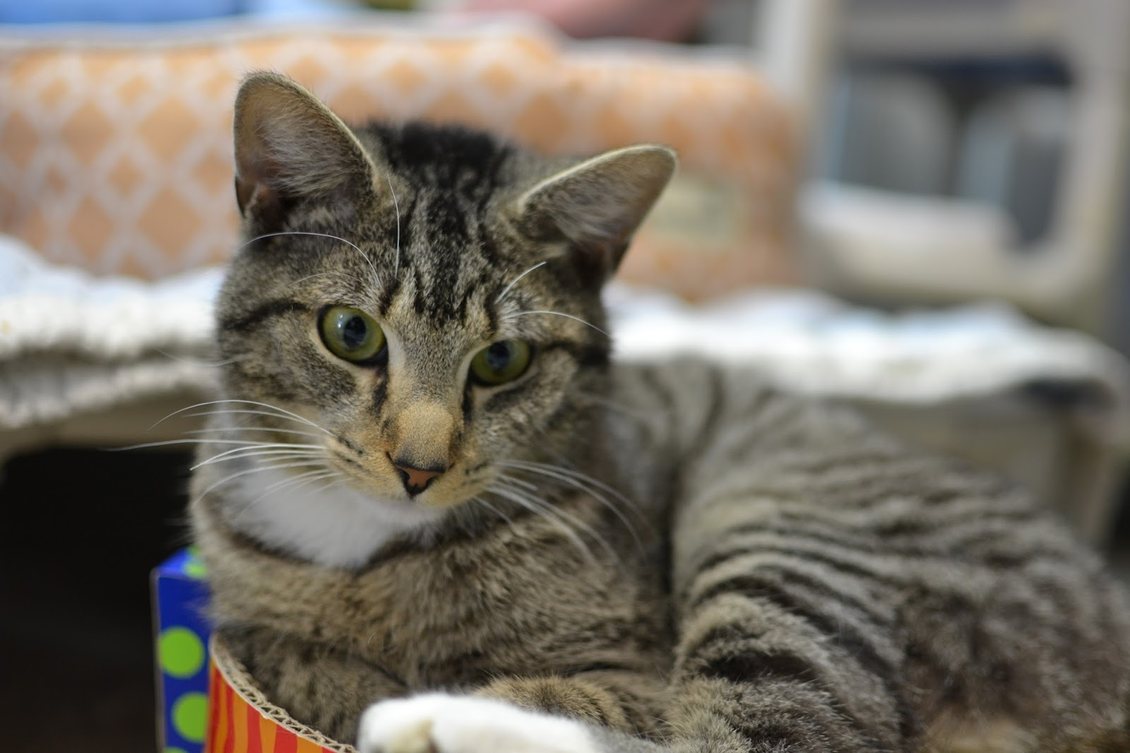 Blind Cat Rescue Amazon Wishlist
