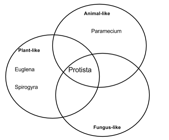 fungal cell venn diagram
