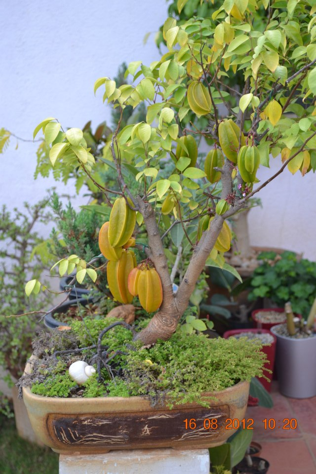 All Things Considered: A bonsai beauty!